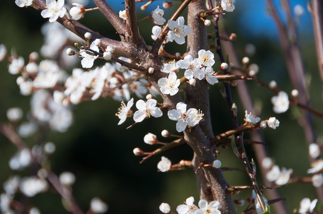 Der Frühling ist eingekehrt
