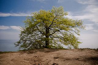 Baum an Kliffkante
